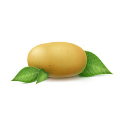 New raw whole unpeeled potato with leaves isolated vector