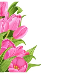 Pink tulips on white background vector