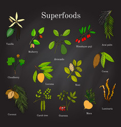 set of hand drawn superfood acai goji cacao vector image