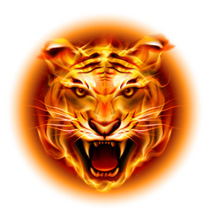 Head of agressive fire tiger isolated on white vector