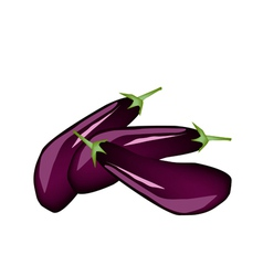 Heap of fresh purple eggplant on white background vector