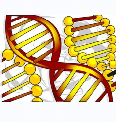 dna model vector image vector image