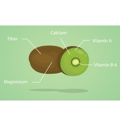 kiwi nutrition explanation with flat style vector image vector image