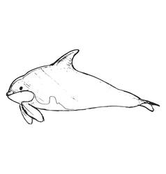 orca vector image