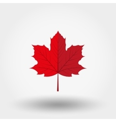 Red maple leaf icon vector