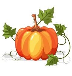 Autumn orange pumpkin vegetable vector