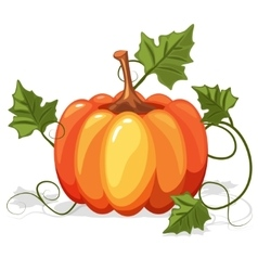 Autumn orange pumpkin vegetable vector
