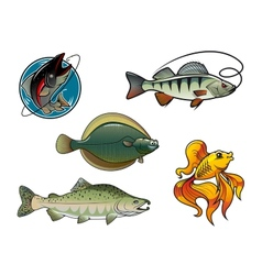 Salmon flounder perch and goldfish vector