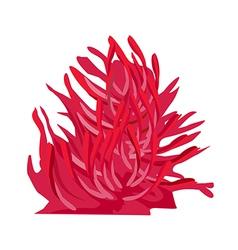 icon coral vector image