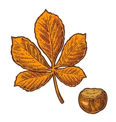 Chestnut leaf and nut color vintage vector image vector image