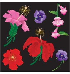 Set of flowers bloom - hibiscus violet vector