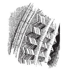 Chevron molding type of fancy roman architecture vector