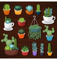 Colorful cactus and succulent set vector image vector image