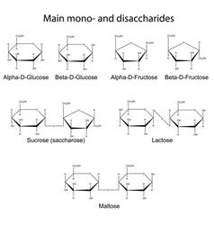 Main cyclic monosaccharides and disaccharides vector
