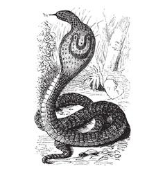 Indian Cobra vintage engraving vector image