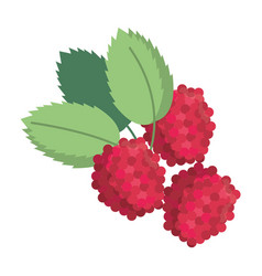 raspberry natural diet icon vector image
