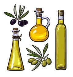 Set of olive oil bottles with black and green vector