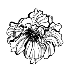 Flower scetch detailed hand drawn poppy vector