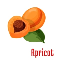 Apricot fresh juicy fruit icon vector