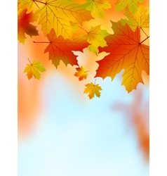 Fall yellow maple leaves eps 8 vector