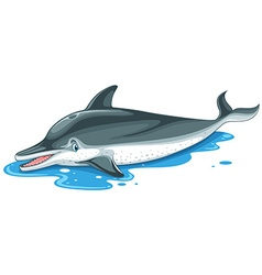 Dolphin with cute face on water vector
