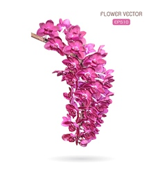 image of orchid flower vector image vector image