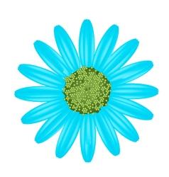 Light blue daisy flower on white background vector