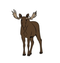 A moose vector