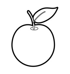apple vector image vector image