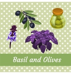 Combination of basil and olives five items vector