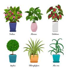 cartoon houseplants in pots vector image vector image
