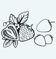Strawberries with leaves vector image