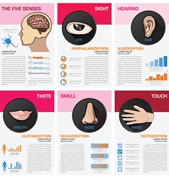 The five senses chart diagram infographic vector