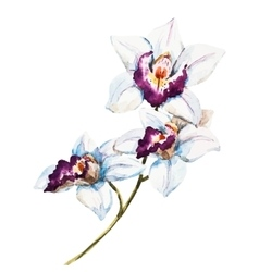 Watercolor orchid flowers vector image vector image