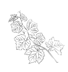 Grape leaves baroque plants vector