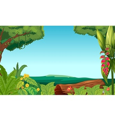 A view of the jungle vector image