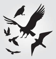 flying hawks and seagulls vector image vector image