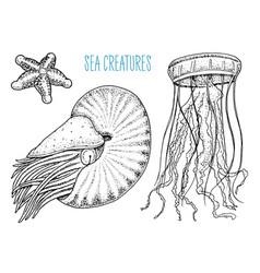 Sea creature nautilus pompilius jellyfish and vector