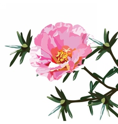 Delicate pink rose flower isolated vector