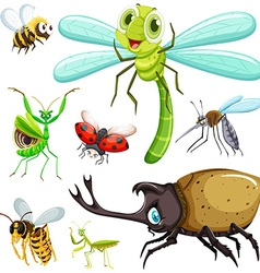 Different kinds of insects vector image vector image