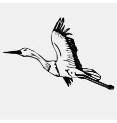 Hand-drawn pencil graphics stork swan engraving vector