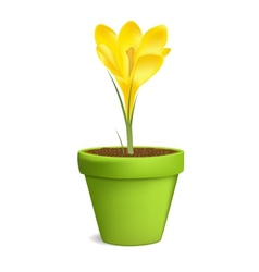 Crocuses in flowerpot isolated on white vector