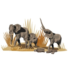 African Elephant vector image