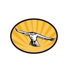 goshawk bird swooping down vector image