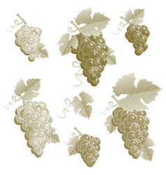 Bunches of grapes vintage set vector