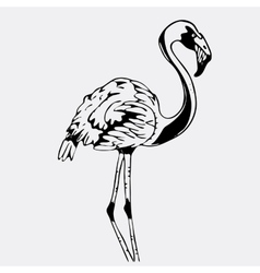 Hand-drawn pencil graphics bird flamingo vector image