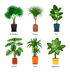 Decorative indoor palm trees in pots vector