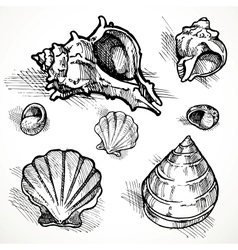 Set of sketches different shapes shell 2 vector
