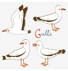 Seagulls collection vector
