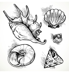 Set of sketches different shapes shell vector image
